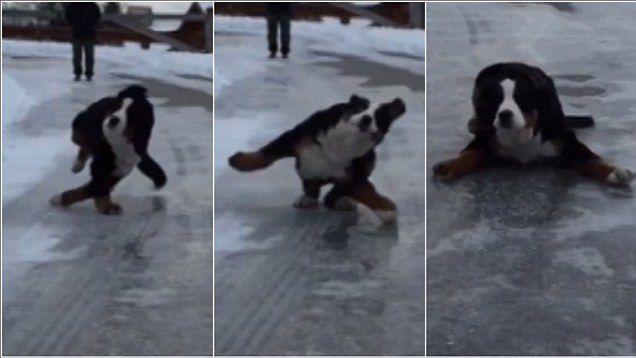 dog slip